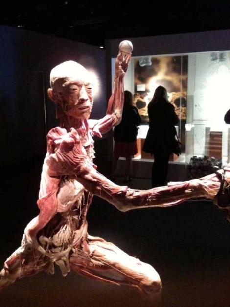 Dead Body Exhibit
